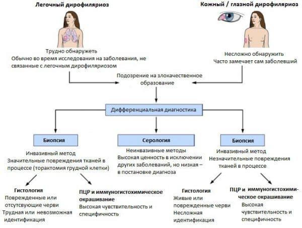 диагностика дирофиляриоза